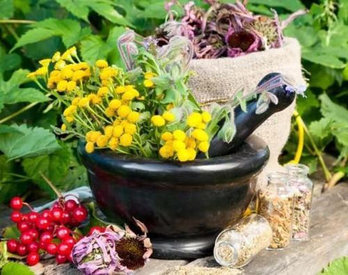 Лекарственные растения для детей. Материал для занятия: иллюстрации с изображением лекарственных растений.