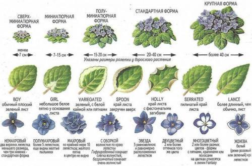 Как определить название комнатного растения. Определитель комнатных растений