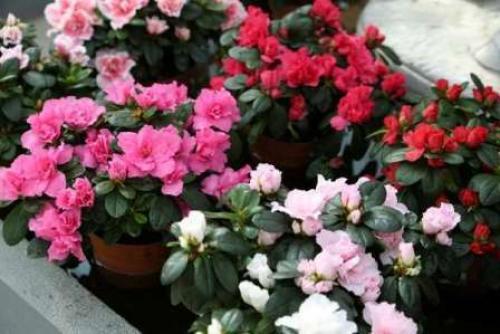 Комнатные растения уход. Комнатные цветы — иллюстрированные названия популярных разновидностей