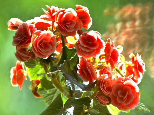 Самые красивые цветущие комнатные цветы фото и названия