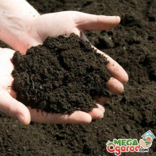 Флоксы можно ли сажать осенью. Подготовка почвы и посадочного материала