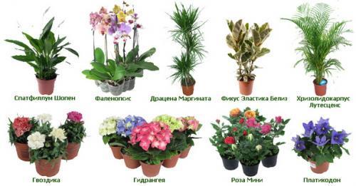 Идентификатор комнатных растений. Как узнать название цветка комнатного при помощи определителя и интернета