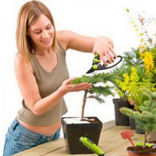 Уход за комнатными растениями: температурный режим