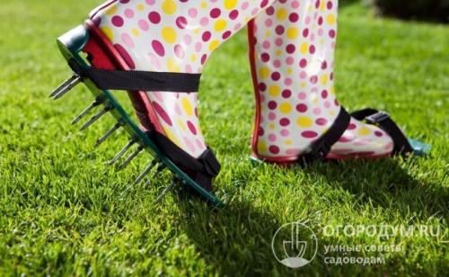 В огороде мох, как избавиться. Мох на садовом участке: что предпринять