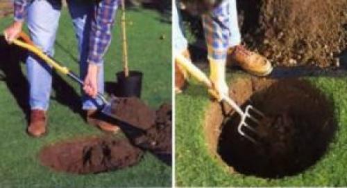 Подготовка ямы для посадки яблони осенью. Подготовка места