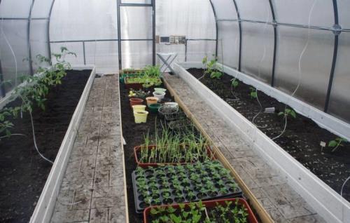 Подготовка грунта в теплице для помидор. Подготовка почвы под рассаду томатов