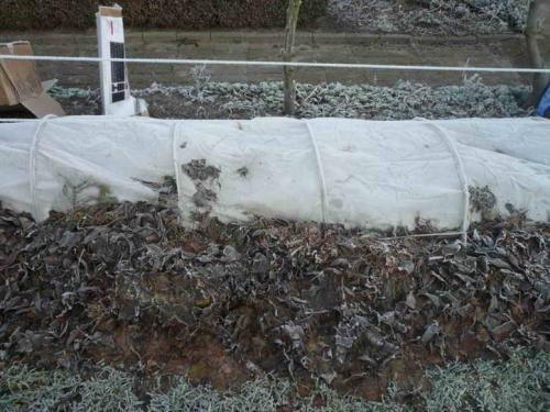 Подготовка виноградной лозы к зиме в подмосковье. Как правильно подготовить кзиме молодые кусты
