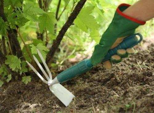 жесткая земля в огороде что делать