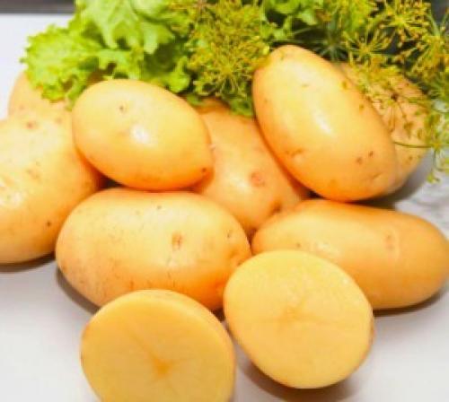 Сорта картофеля в украине. Сорта картофеля для Юга Украины: фото и описание
