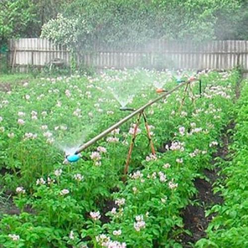 Автоматический полив для огорода. Автоматический полив огорода на даче