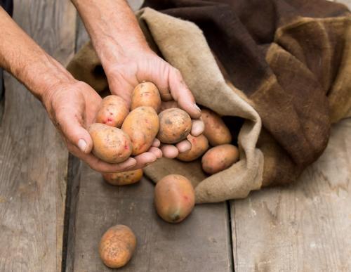 При, какой температуре замерзнет картошка. При, какой температуре замерзает картофель