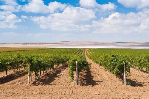 Виноград на Кубани лучшие сорта. Особенности виноградарства на Кубани