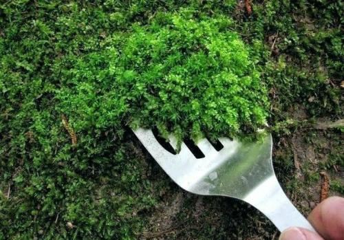Мох на земле в огороде, как избавиться. 5 способов, как избавиться от мха в огороде