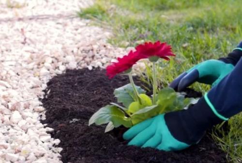 Как привести в порядок руки после огорода в домашних условиях. Как привести руки в порядок после дачи! Отмываем руки от земли, травы и сорняков! ТОП 5 средств.