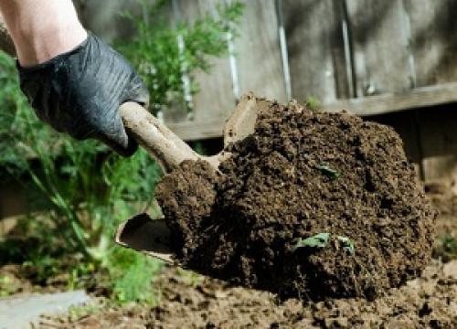 Чем осенью обеззаразить почву. Как и чем обработать землю осенью от болезней и вредителей: общие правила обработки грунта и эффективные народные средства