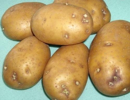 Какие семена картофеля лучше. Секреты семенного картофеля