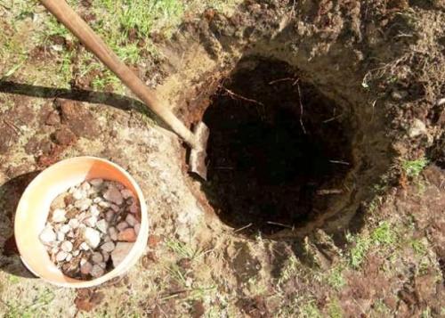 Как выбрать место для посадки яблони. Подготовка места и почвы