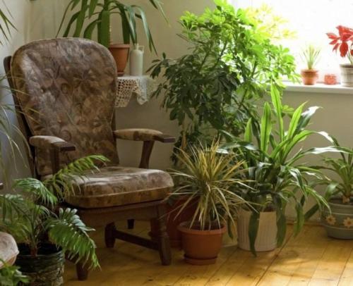 Тенелюбивые растения теневыносливые светолюбивые. Поклонники тени и их таланты