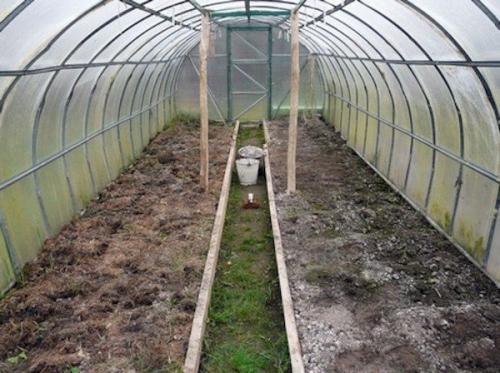 Что делать если в огороде земля позеленела. Почему зеленеет почва в теплице и что с этим делать