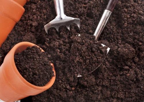 Подготовка почвы под рассаду томатов и перцев. Как приготовить почвосмесь своими руками?