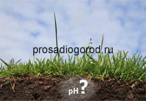Если земля зеленеет и покрывается мхом