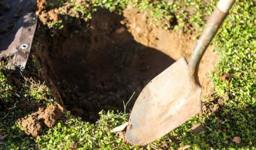Посадочная яма для яблони. Подготовка ямы и удобрения при посадке яблони