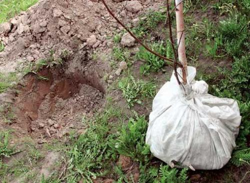 Когда сажать деревья осенью в украине. 4 важные особенности осенней посадки деревьев