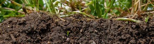 Как улучшить почву осенью.  Севооборот