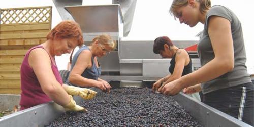 Вино из недозревшего винограда. ПОДГОТОВКА К ИЗГОТОВЛЕНИЮ ВИНА В ДОМАШНИХ УСЛОВИЯХ