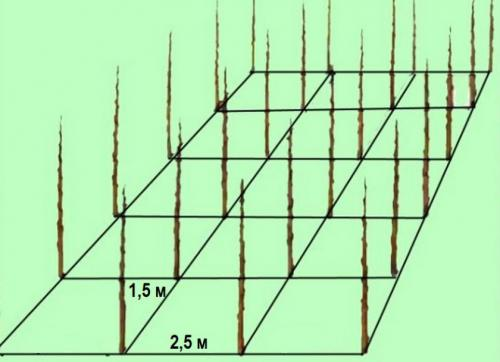 Расстояние от яблони до яблони. Какое расстояние должно быть между яблонями при посадке