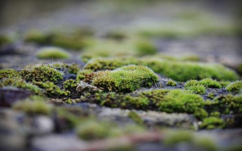 Зеленая земля в огороде, как бороться. Как бороться с зеленой землей в теплице?