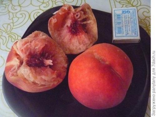 Как посадить персик косточкой под зиму в землю