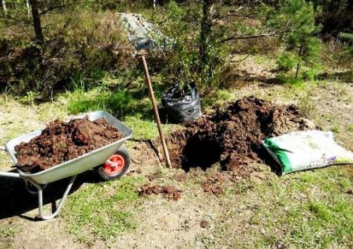 Подготовка ямы под посадку яблони. Особенности подготовки