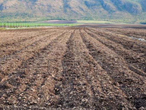 Подготовка почвы под ранний картофель. Подготовка грунта