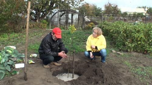 Удобрение для груши осенью. Осенние мероприятия по уходу за фруктовым садом