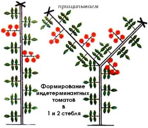 Формирования томатов в открытом грунте. Густо или редко? | Зелёный сад