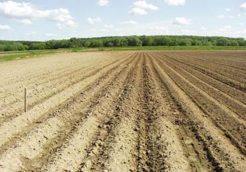 Подготовка участка под картофель осенью. Маленькие хитрости