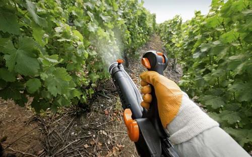 Обработка винограда осенью от оидиума. Профилактика оидиума на винограде: когда и чем обрабатывать виноград от мучнистой росы