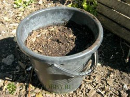Чем обрабатывать виноград перед укрытием на зиму. Удобрения, вносимые осенью перед укрытием винограда