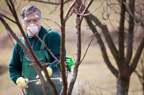 Опрыскивание яблонь от вредителей осенью. Как опрыскивать яблоню и другие плодовые деревья осенью: правила и рекомендации