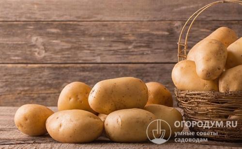 Как хранить картошку в городской квартире. Хранение картофеля в домашних условиях