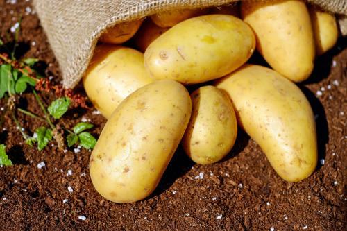 Осенняя подготовка почвы под картошку. Выбираем место под посадку