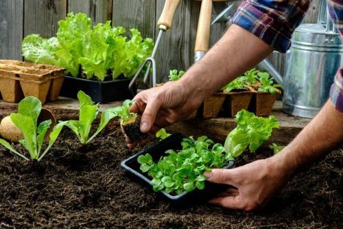 Что можно посадить под зиму в открытый грунт. Посадка зелени под зиму = супер ранний урожай!
