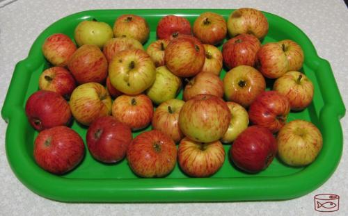 Как заморозить яблоки. Стоит ли замораживать яблоки в запас? Мой эксперимент, показываю, что с ними стало