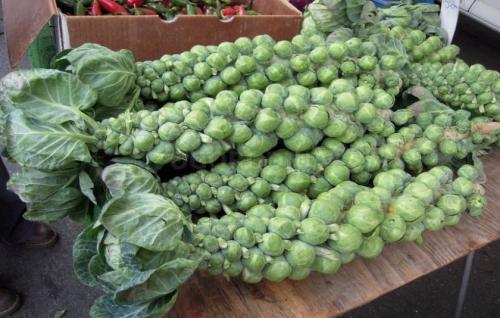 Как хранить капусту брюссельскую. Как хранить брюссельскую капусту на зиму