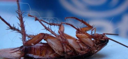 Как избавиться от тараканов. Самые эффективные средства от тараканов в квартире заводского изготовления