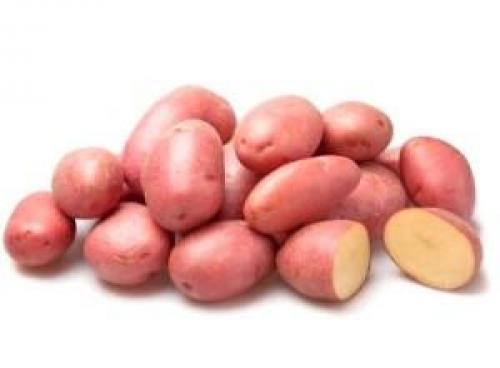 Картофель беллароза. Корнеплод