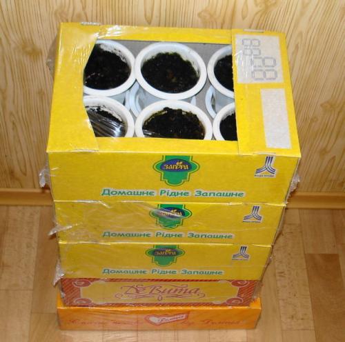 Как хранить зимой глоксинию. Способы хранения клубней глоксиний в период покоя