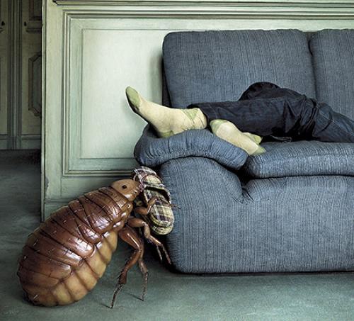 Как избавиться от клопов в диване. Клоповьи страсти: насекомые в диване