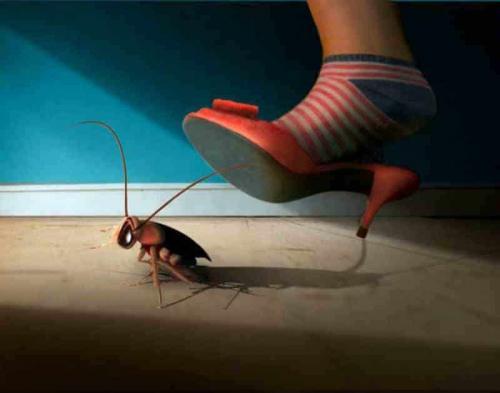 Один таракан в квартире. Черные
